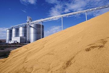 Allarme finanziario nella filiera del grano duro