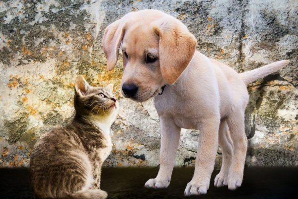 Un'applicazione di dating per gli amanti degli animali