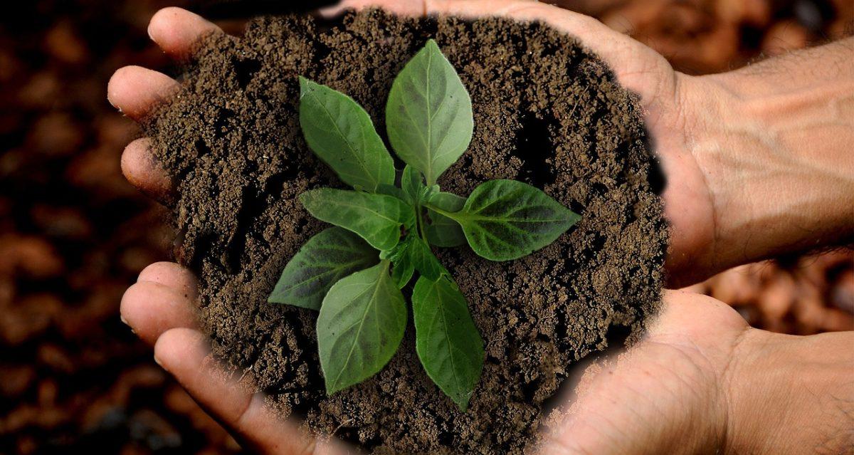 Rendere più sostenibile la filiera alimentare e dell'agricoltura