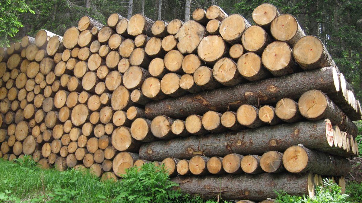 """""""Legal wood"""": il progetto per contrastare il mercato del legno illegale"""