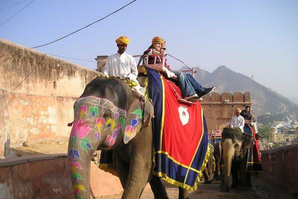 elefante in India