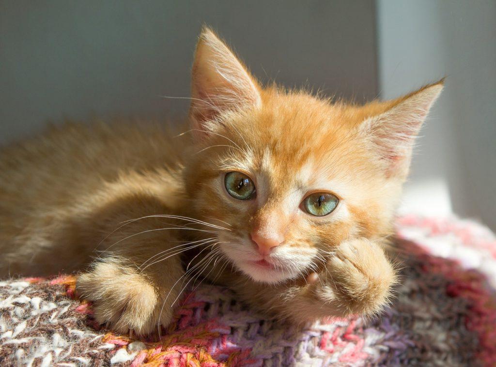 Gatti e lockdown:  com'è andata la convivenza?