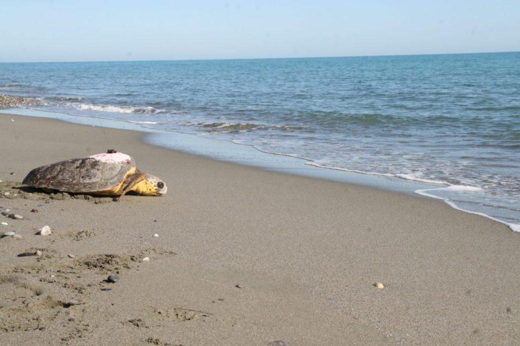 WWF: estate in stile Ecotips per difendere il mare