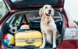 Estate 2020: 3,5 milioni di italiani andranno in vacanza  col proprio animale