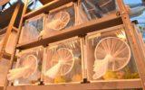 Vespine contro cimici: avanti con i lanci,  nei siti trentini