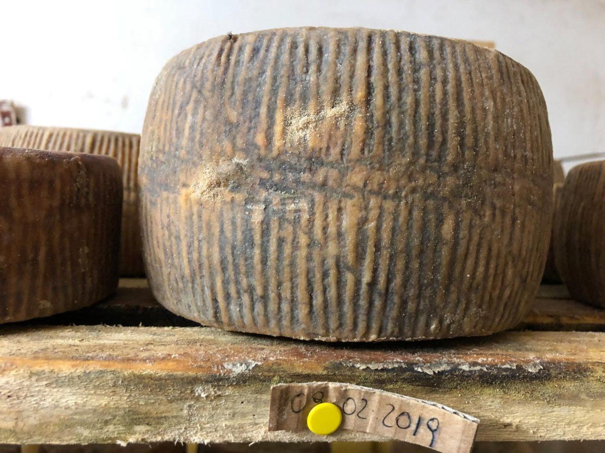 Viaggio nell'Italia dei Presidi Slow Food:  il pecorino di Carmasciano