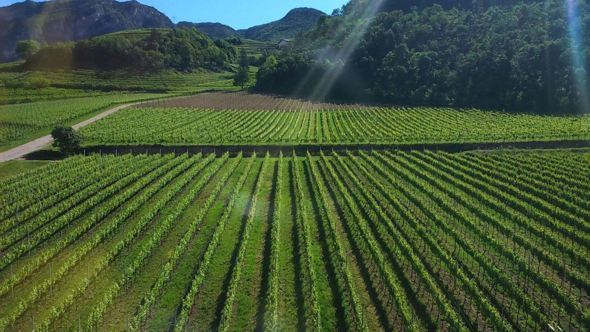 Clima e viticoltura, un progetto che coinvolge sei paesi europei