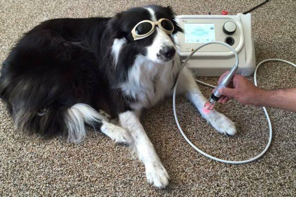 """""""Dog sport"""", sempre più persone preferiscono allenarsi con il proprio cane"""