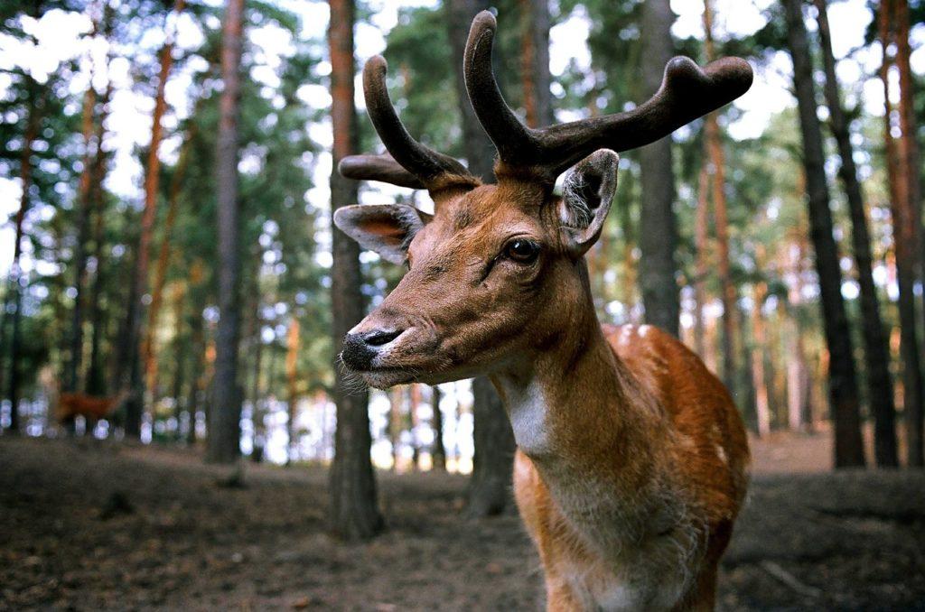 fauna selvatica