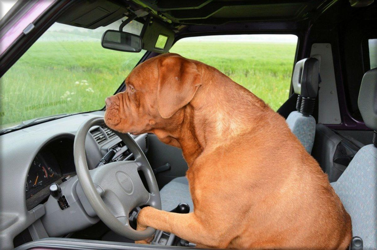 le norme per il trasporto in auto degli animali