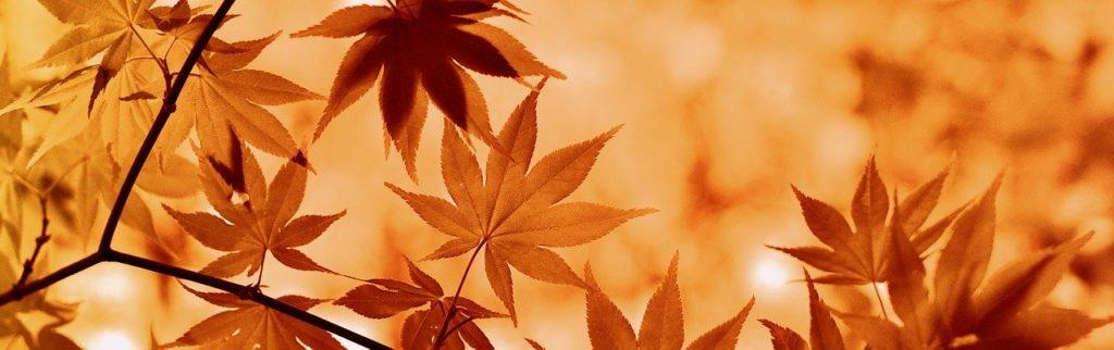 è arrivato l'autunno