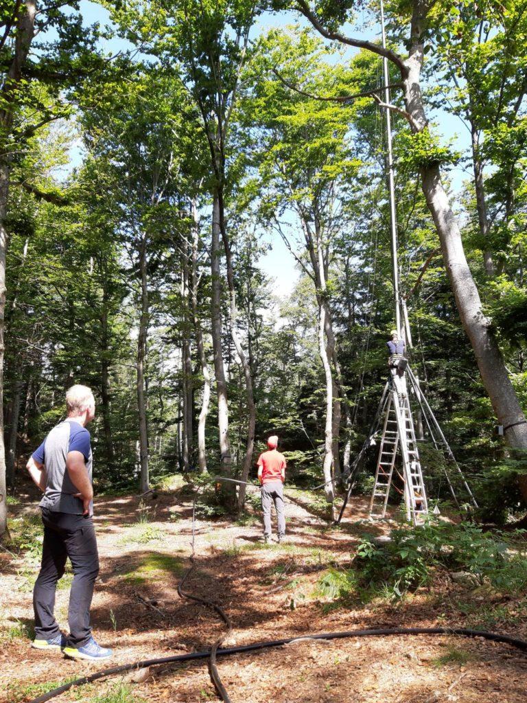 """La salute degli alberi oggi si """"misura"""" in internet"""