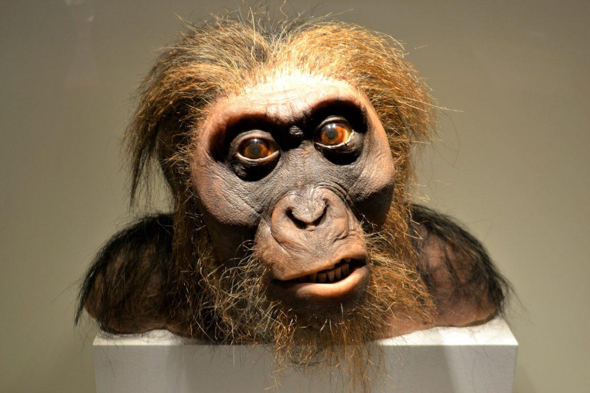 studio dna uomo neanderthal