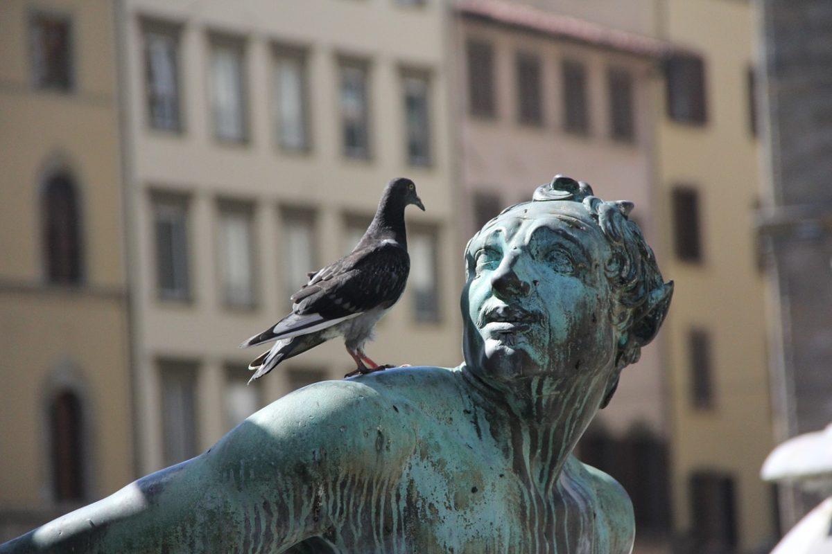 asta record piccione viaggiatore