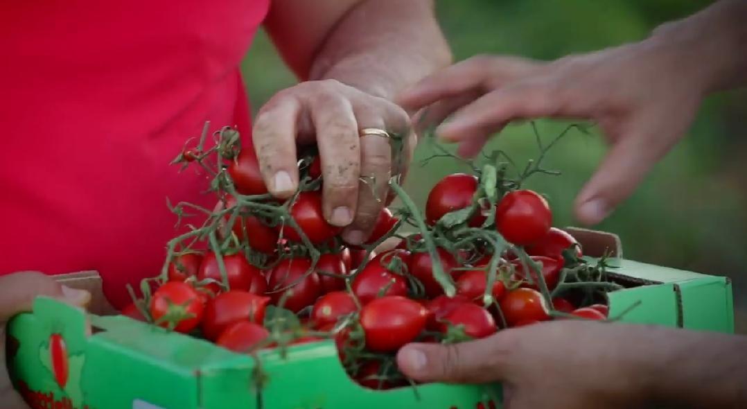 Il siciliano pomodoro buttiglieddru è il nuovo Presidio Slow Food