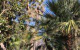 Allo Zoo di Napoli passeggiate nel verde tra vegetazione e animali