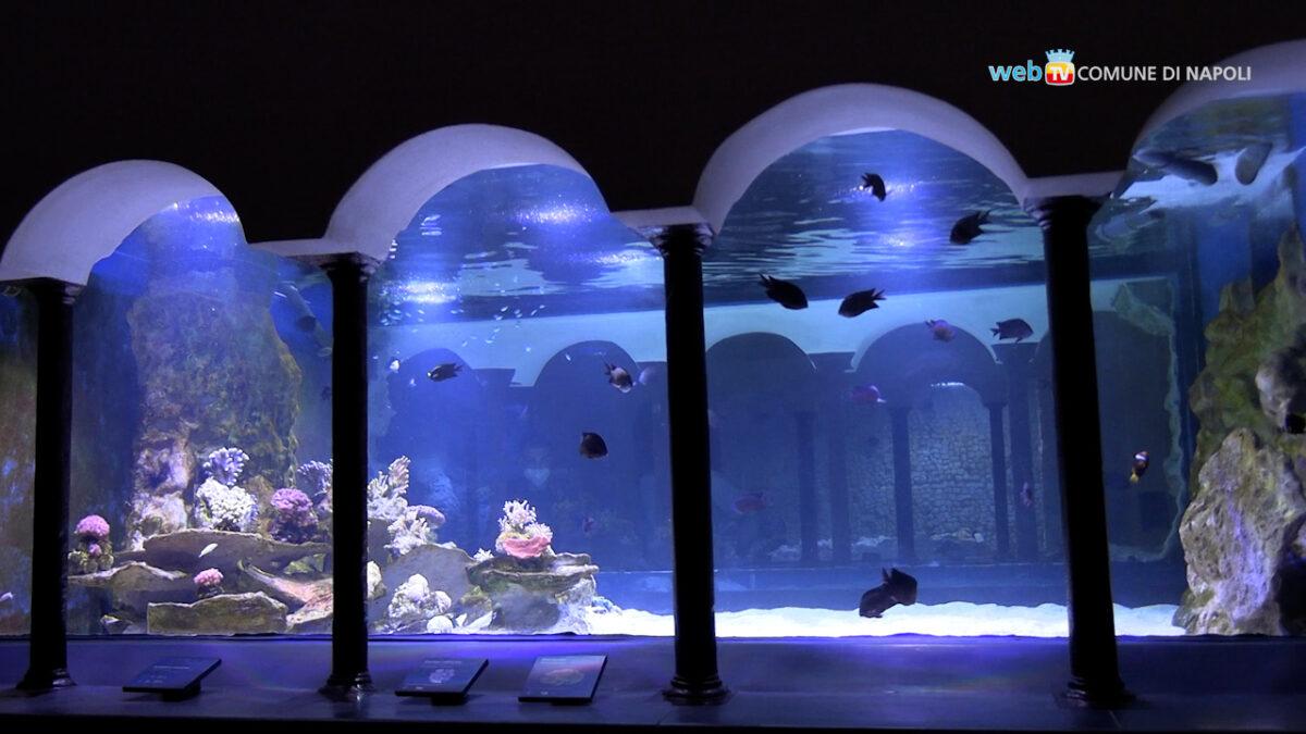 Napoli, restaurato l'Aquarium della Stazione Zoologica Anton Dohrn