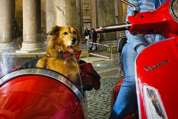 Cani: cinque incredibili esperienze da fare con loro
