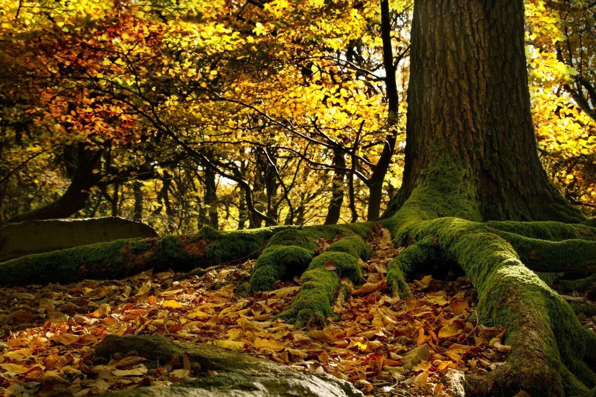 foreste italia patrimonio unesco