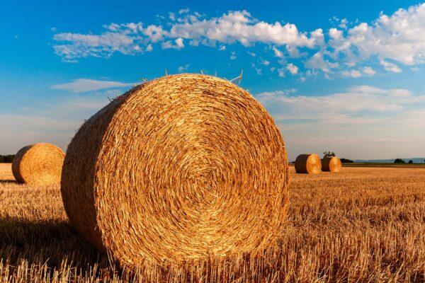 spighe verdi sviluppo rurale