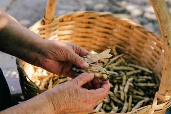 Il fagiolo poverello, in Calabria, è un nuovo Presidio Slow Food