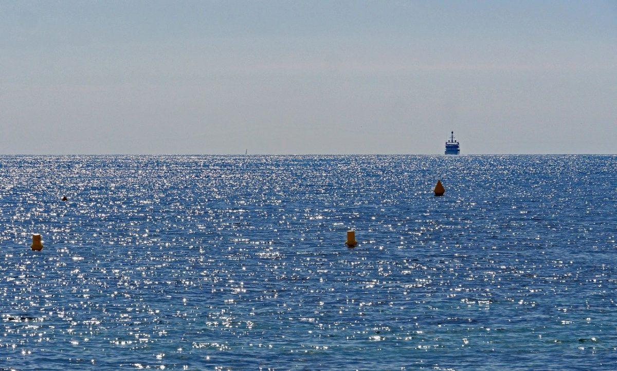 Pesce coniglio: il suo arrivo nel Mediterraneo preoccupa gli scienziati